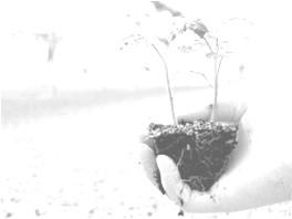 Türkiye'de Bitkisel Üretimin Durumu ve Gelecek Stratejileri