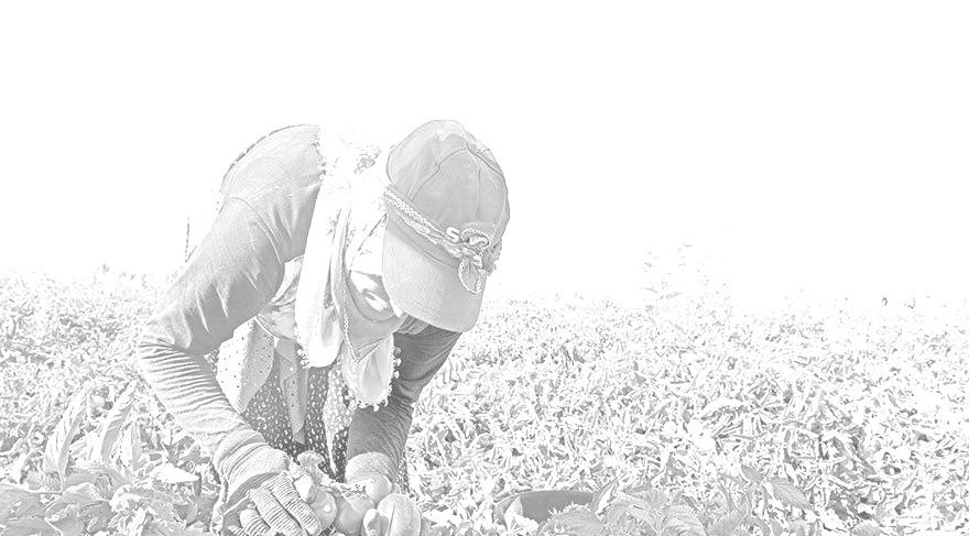 Türkiye'de Tarımın Yapısı ve Kaynakları: Tehditler ve Fırsatlar