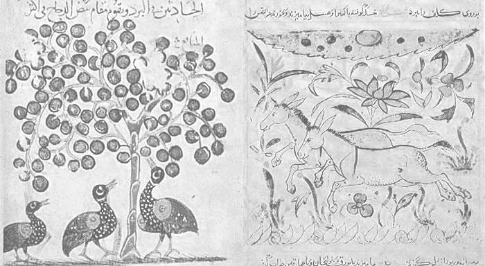 Evrim ve Müslümanlar