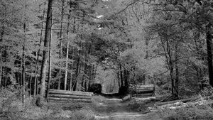 Ormanlarımızda ve ormancılığımızda neler oluyor: Ne yapılmalı?