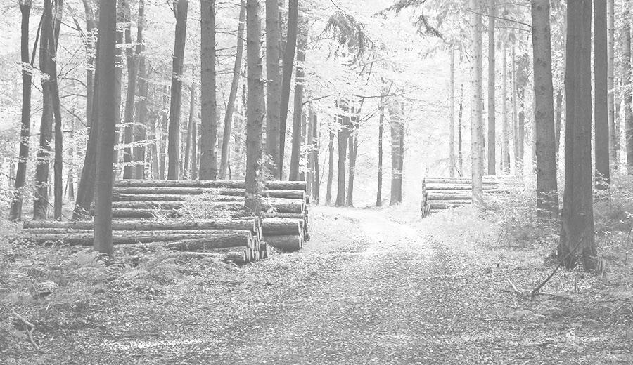Ormanlarımızda ve ormancılığımızda neler oluyor?