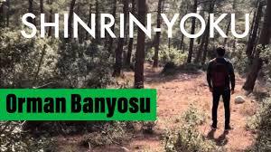Orman Banyosu (Shinrin Yoku)